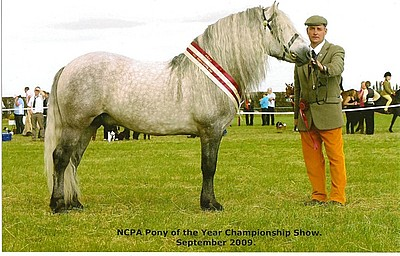 Balleroy Minstrel - Northern Counties Pony Association - Pony of the Year Award